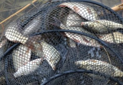 Dosare penale pentru braconaj piscicol.Polițiștii au tras focuri de avertisment
